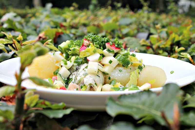Dampede rødspættefileter i urtesovs med salat